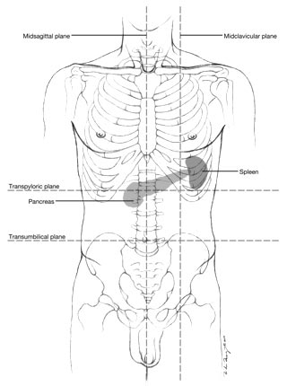 Anatomical diagram bamboo bones objective produce an anatomical diagram identifying the location of thoracic or abdominal organs relative to surface landmarks and skeletal anatomy ccuart Images